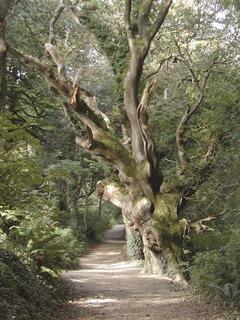 England – Gartenreise Südengland
